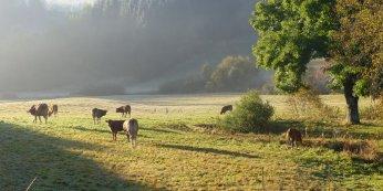 Landschaft der Auvergne